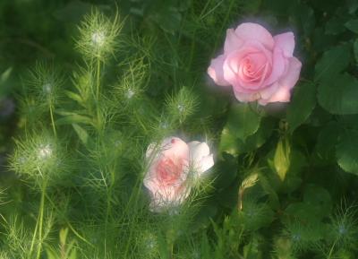 rose0603