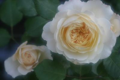 rose0607