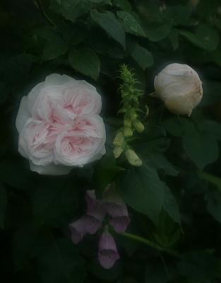 rose0622