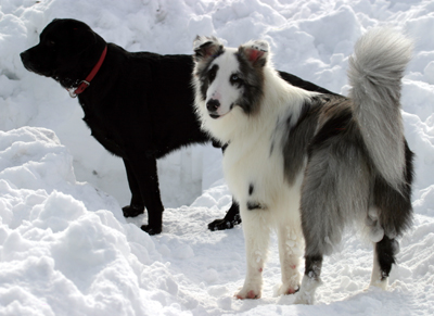 snowdogs8