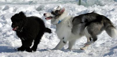 snowdogs10