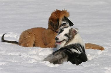 snowdogs4