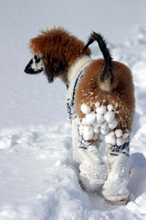 snowdogs5