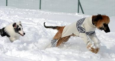 snowdogs6