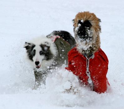snowdogs13
