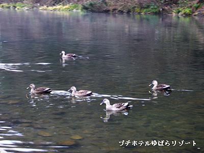 20061216094808.jpg