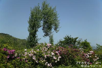 オブジェの様な木