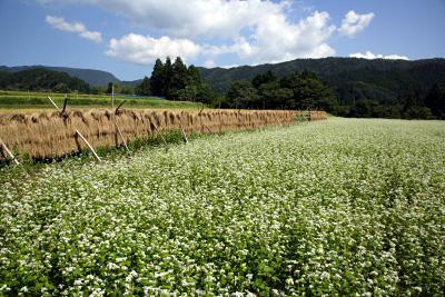蕎麦の花と稲穂と大山