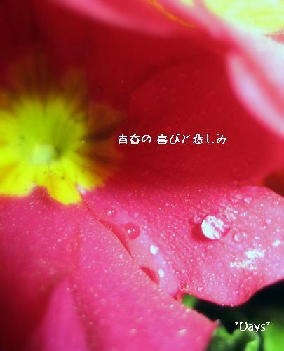 20061210014130.jpg