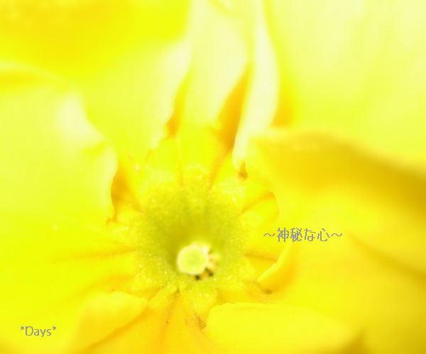20061210014140.jpg