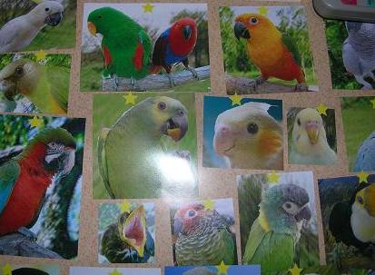 鳥たちアップ