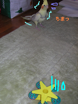 20060503202201.png