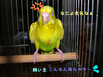 20060801203327.png