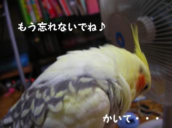 20060910212240.jpg