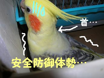 20061111214643.jpg