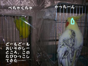 20061111215729.jpg