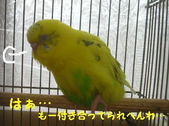 20061120110949.jpg