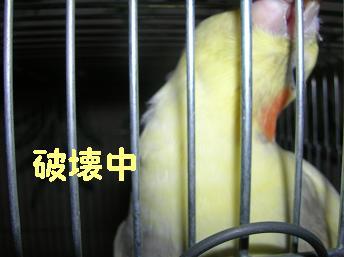 20061130204024.jpg