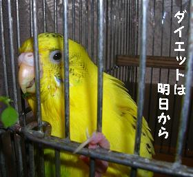 20061212205747.jpg