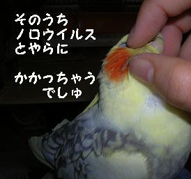 20061219210729.jpg