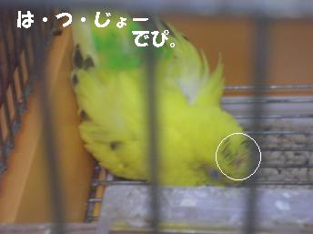 20070101191934.jpg