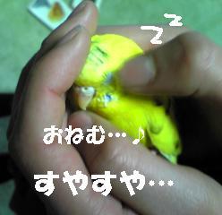 20070125210725.jpg
