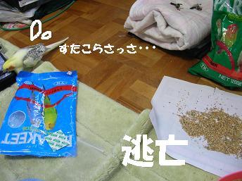 20070127145719.jpg