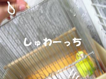 20070203221121.jpg