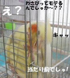 20070403201426.jpg