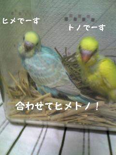 20070727212505.jpg