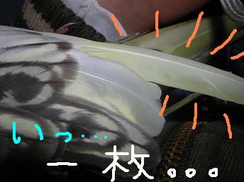 いっ…一枚…(*≧m≦*)