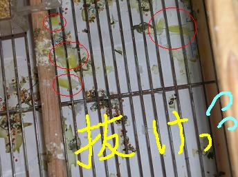 ○印の付いてる所が落ちた羽毛です(^▽^;