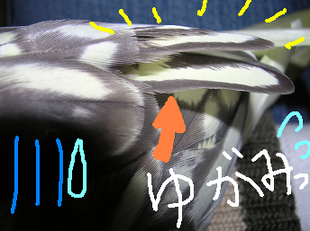 yugami.png