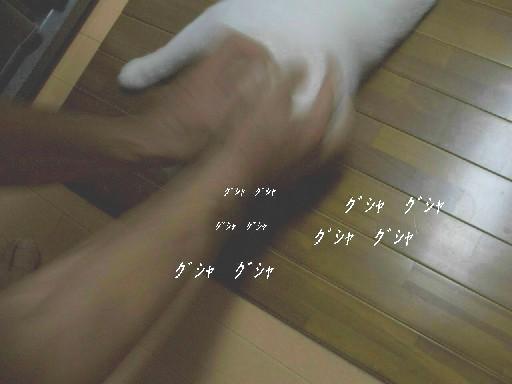 CIMG2593.jpg
