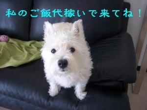 20070818011606.jpg