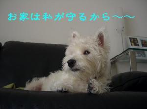 20070818011620.jpg
