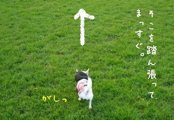 s-P1160511.jpg
