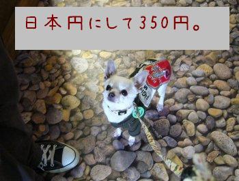 s-P1170131.jpg