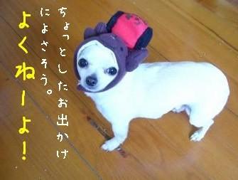 s-P1170320.jpg