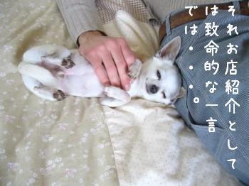 s-P1170835.jpg
