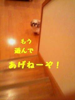 20070425234039.jpg