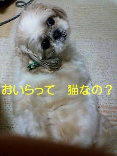 20070520132904.jpg