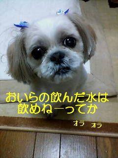 20070521224555.jpg
