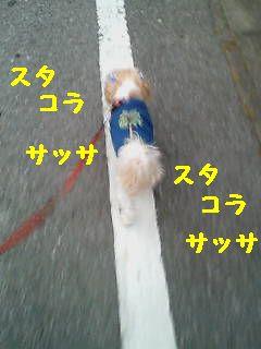 20070529182557.jpg