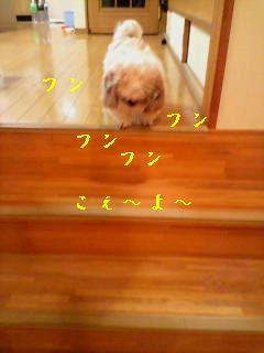 20070604225915.jpg