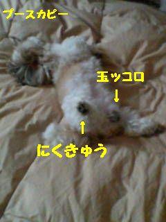 20070624111652.jpg