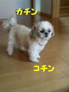 20070701163532.jpg