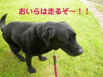 20060701125436.jpg