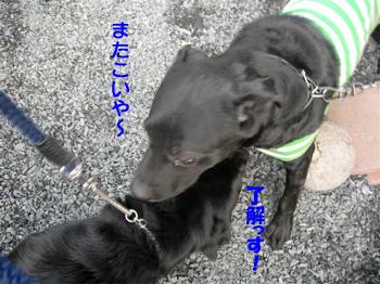 20061104200553.jpg