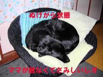 20070114110516.jpg